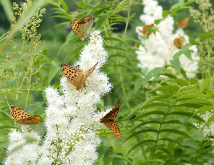花香自有蜂蝶至 让自己变得优秀起来
